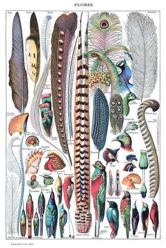 640px-Types_de_plumes._-_Larousse_pour_tous,_-1907-1910-
